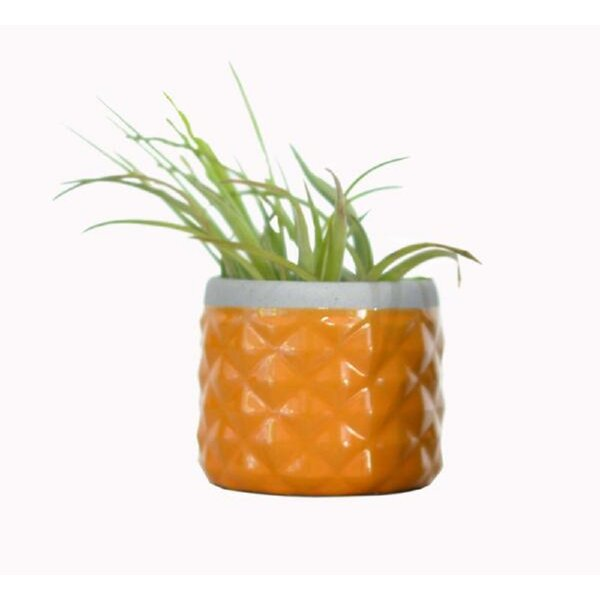 Backes Ceramic Pot Planter by Ivy Bronx