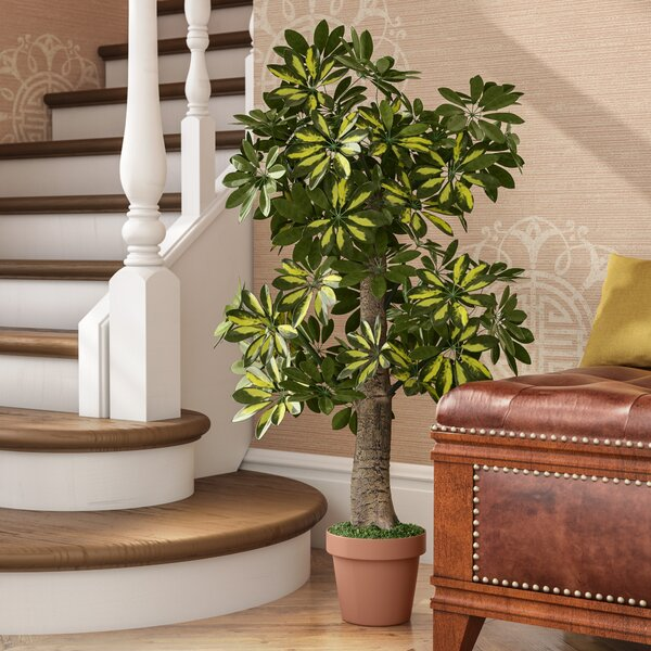 Schefflera Tree with Pot by Fleur De Lis Living