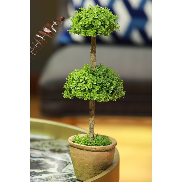 Triple Ball Orchid Topiary in Pot by August Grove