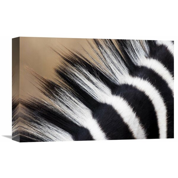Nature Photographs Zebra Mane, Khama Rhino Sanctuary, Serowe, Botswana by Vincent Grafhorst Photographic Print on Wrapped Canvas by Global Gallery