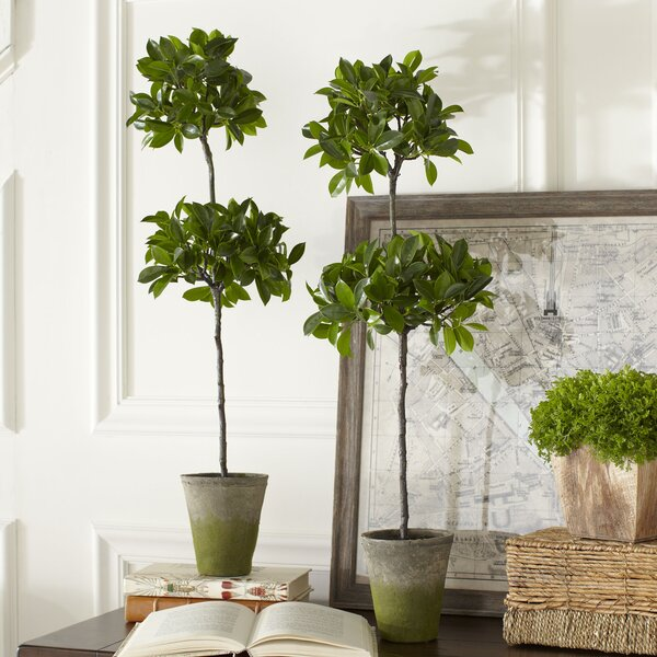 Faux Ficus Potted Topiary by Birch Lane™