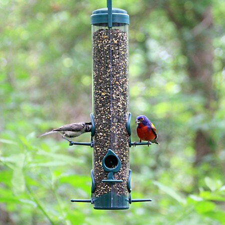 Classic Tube Bird Feeder by Woodstream Wildbird