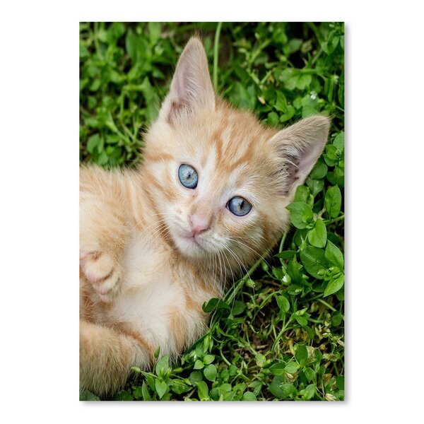 Kitten Pet Cat Animal Photographic Print by East Urban Home