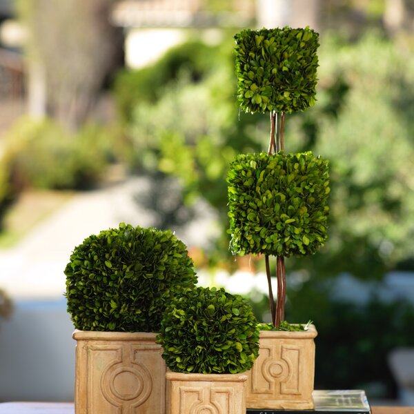 Cinzia Boxwood Desktop Topiary in Pot by Zodax