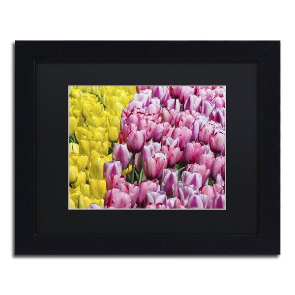 Tulip Heaven by Kurt Shaffer Framed Photographic Print by Trademark Fine Art