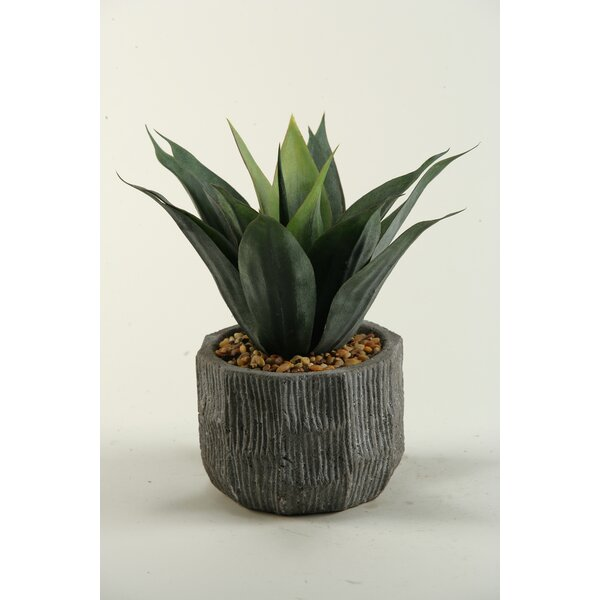 Agave Desk Top Plant in Planter by D & W Silks