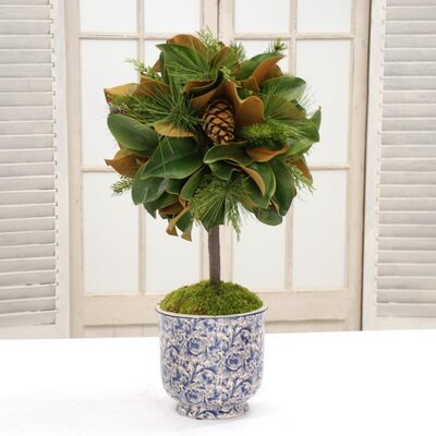 Magnolia Leaf Desktop Foliage Topiary in Vase by Red Barrel Studio