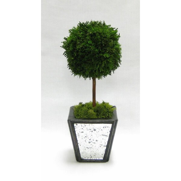 Wooden Container Ball Topiary in Pot by Bougainvillea