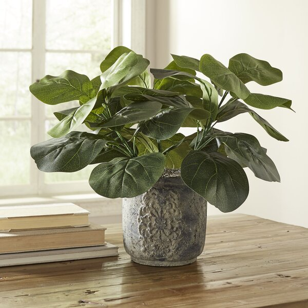 Potted Fiddle-Leaf Fig Desktop Plant by Birch Lane™