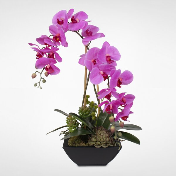 Phalaenopsis Silk Orchids with Succulents Floral Arrangement in Metal Planter by Latitude Run