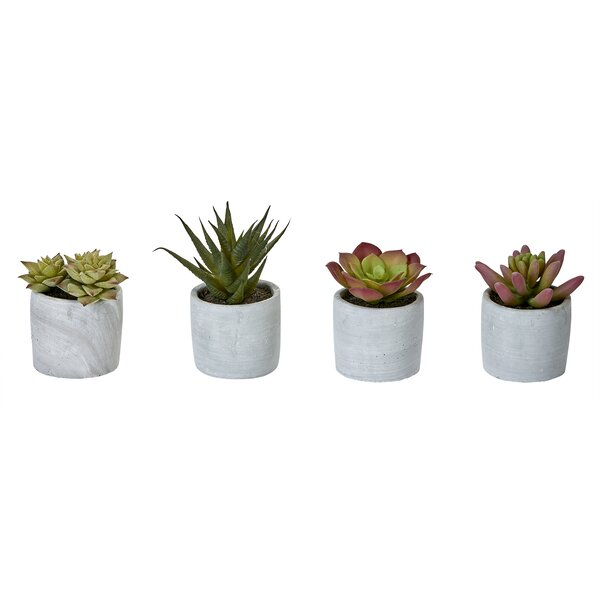 4 Piece Desktop Succulent Plant in Pot Set (Set of 4) by Bungalow Rose