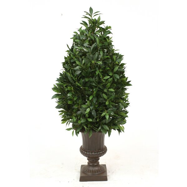 Laurel Pear-Shaped Topiary in Urn by Distinctive Designs