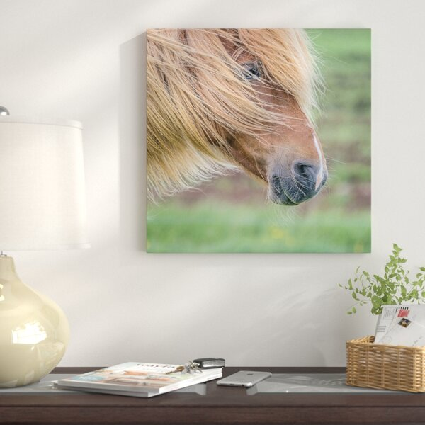 Icelandic Horse I Photographic Print on Wrapped Canvas by East Urban Home