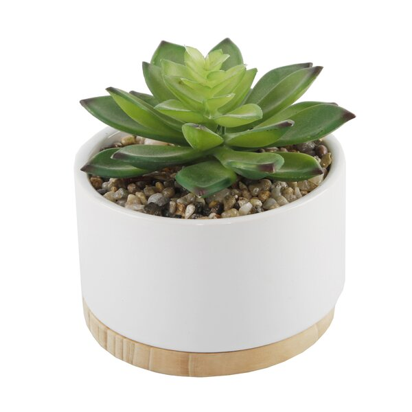 Ceramic Desktop Succulent Plant with Wood Base (Se
