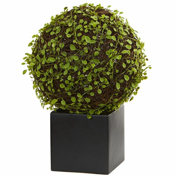Mohlenbechia Ball Moss Topiary in Cube by Brayden Studio