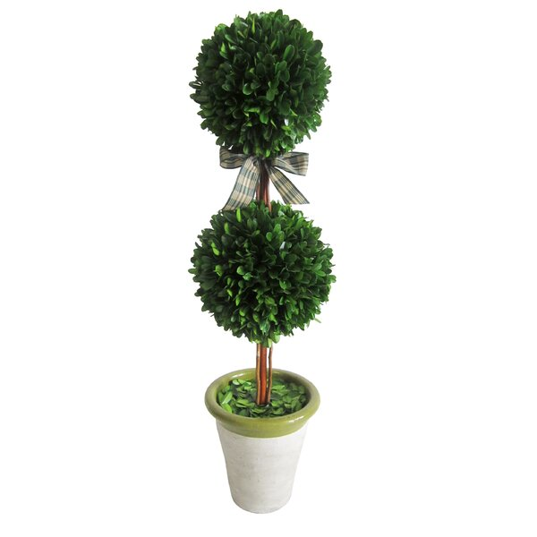 Preserved Boxwood Double Ball Topiary in Pot by Jeco Inc.