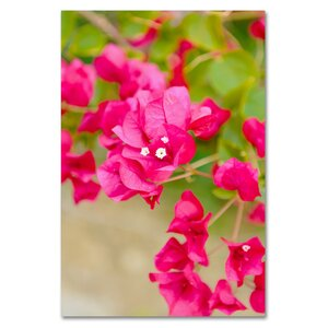 Bougainvillea by Ariane Moshayedi Photographic Print on Wrapped Canvas by Trademark Fine Art