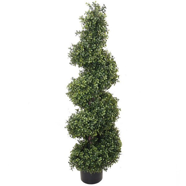 Spiral Topiary Boxwood in Pot by Larksilk