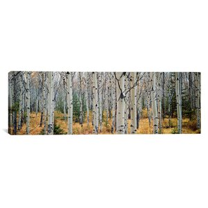 'Aspen Trees in a Forest, Alberta, Canada' Photographic Print on Canvas by Loon Peak