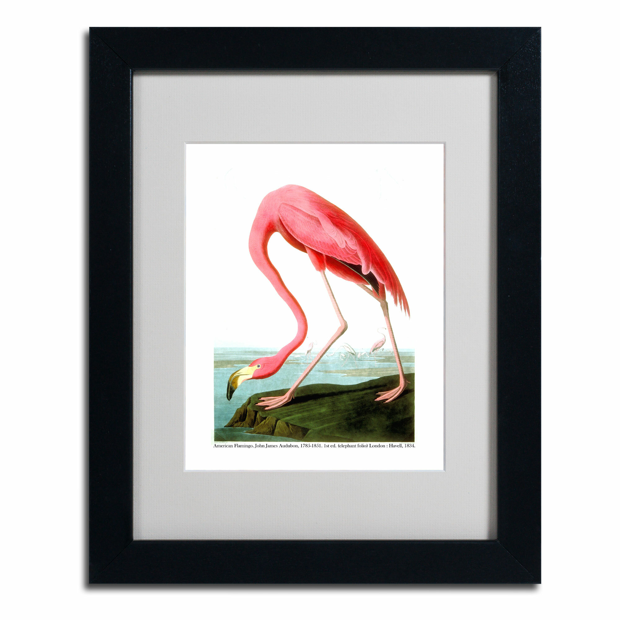 Trademark Art American Flamingo By John James Audubon Framed Painting Print Wayfair