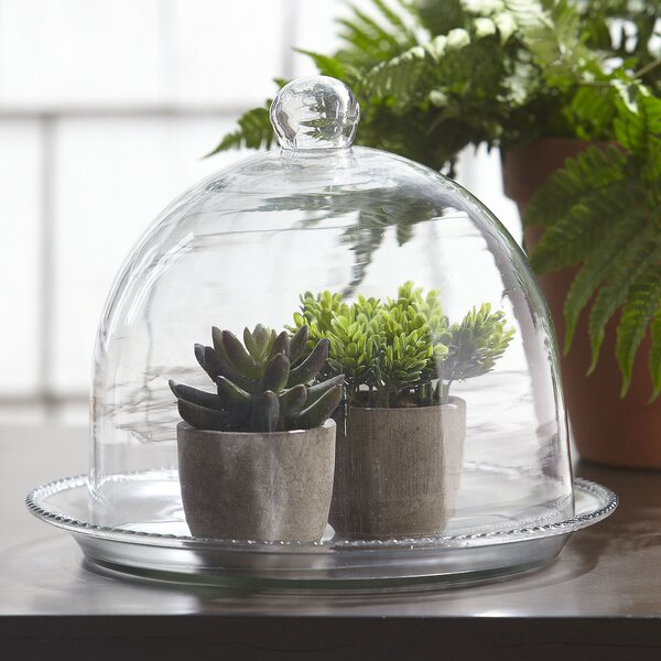 Beaded Glass Terrarium by Birch Lane™