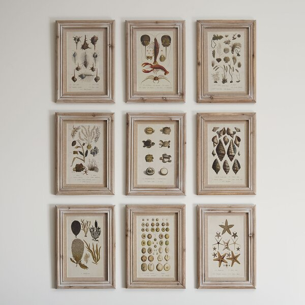 Aquatique Framed Graphic Art Print Set on Wood (Set of 9) by Birch Lane™