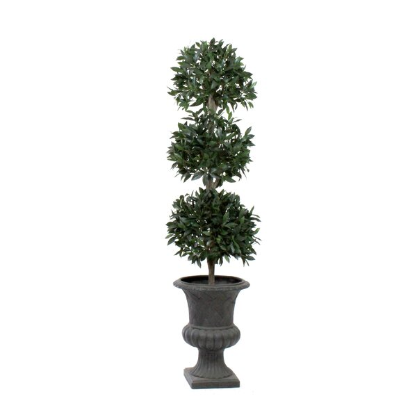 Bayleaf 3-Ball Round Tapered Topiary in Urn by Dalmarko Designs