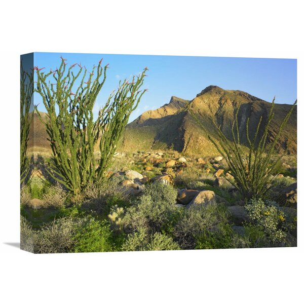 Nature Photographs Ocotillo Borrego Palm Canyon, Anza-Borrego Desert State Park, California Photographic Print on Wrapped Canvas by Global Gallery