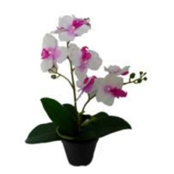 Tropical Orchids Desktop Floral Arrangement in Pot by Bay Isle Home