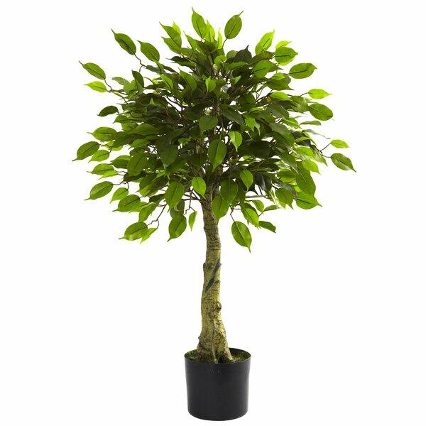Faux Ficus Tree by Alcott Hill