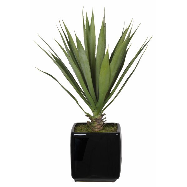 Artificial Desk Top Plant in Vase by Langley Street