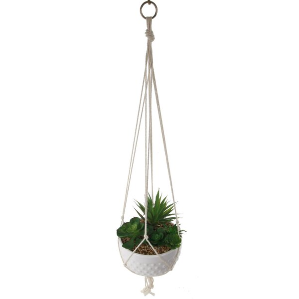 Hanging Succulent Plant in Pot by Bungalow Rose