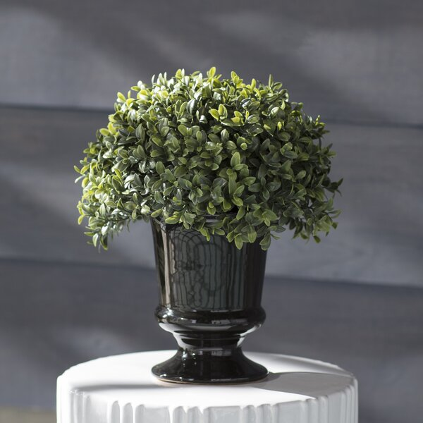 Artificial Half Ball Desk Top Plant in Urn by Andover Mills