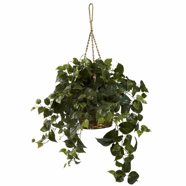 Philo Hanging Plant in Basket by Alcott Hill