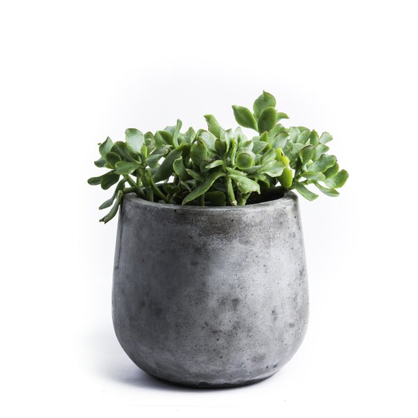 Samai Composite Pot Planter by My Spirit Garden