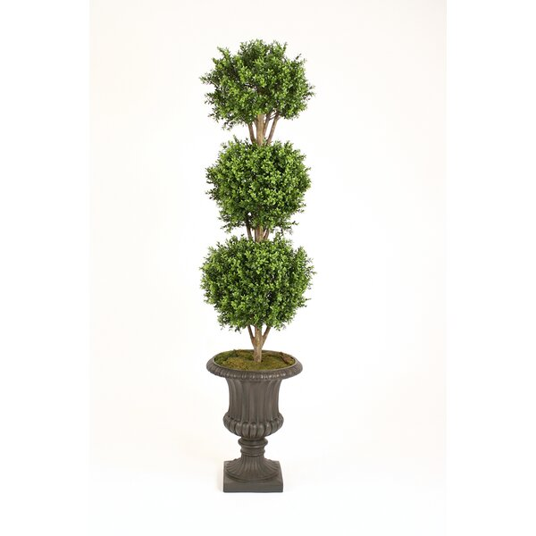 Boxwood Triple Ball Topiary in Urn by Distinctive Designs