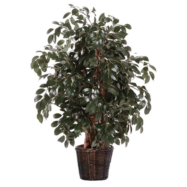 Floor Ficus Tree in Basket by World Menagerie