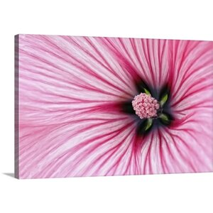'Pink Stripes Flower' by Cora Niele Graphic Art on Wrapped Canvas by Great Big Canvas