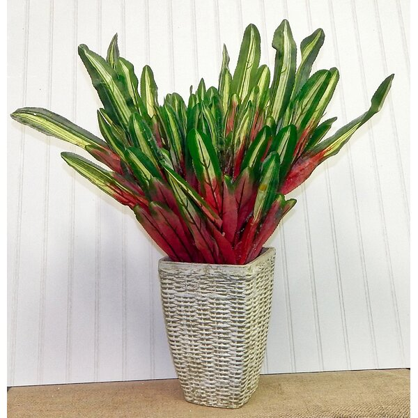 Tropical Croton Floor Foliage Plant in Basket by Bayou Breeze