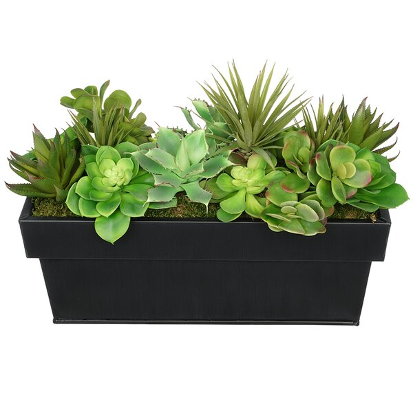 Artificial Succulent in Planter by House of Silk Flowers Inc.
