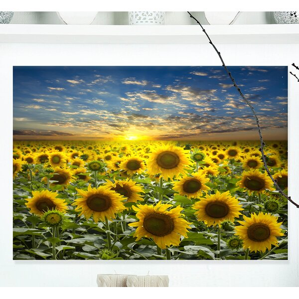 Field of Blooming Sunflowers Photographic Print on