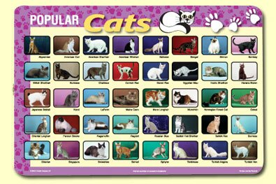 Popular Cats Placemat (Set of 4) by Painless Learning Placemats