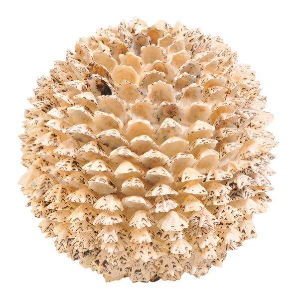 Decorative Sacharine Shell Ball (Set of 4) by BIDKhome