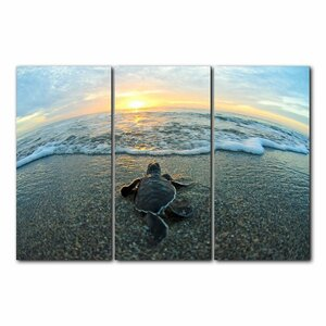 Baby Turtle on the Beach' Framed 3 Piece Photo Graphic Print Set on Canvas by Beachcrest Home