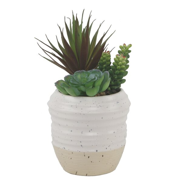 Succulent Plant in Pot by Bungalow Rose