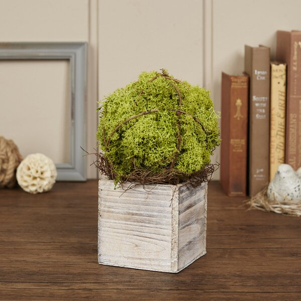 Filius Preserved Moss Topiary by Birch Lane™