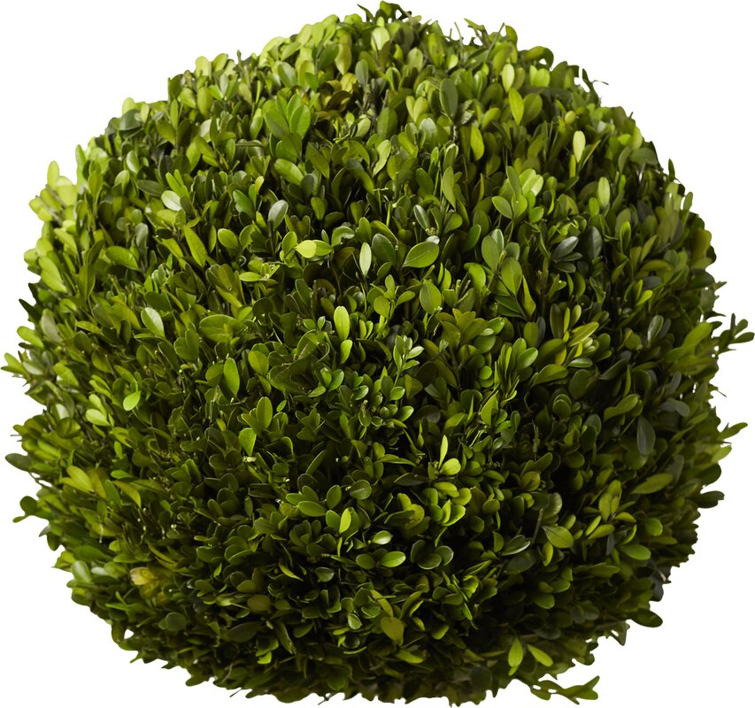 Preserved Boxwoods Ball Topiary #boxwood #topiary