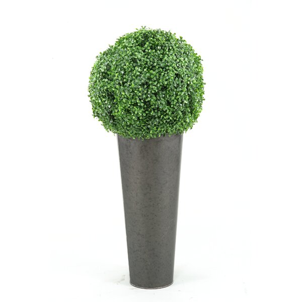 Boxwood Ball Round Topiary in Planter by D & W Silks