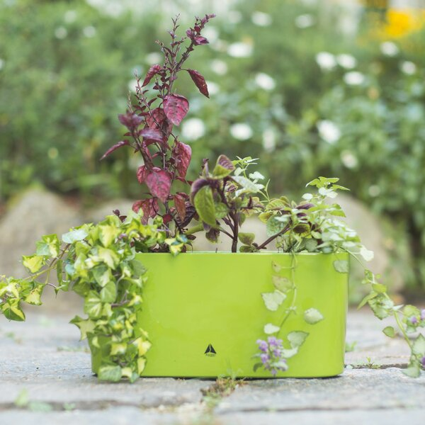 Byrum Self-Watering Plastic Pot Planter by Wrought Studio
