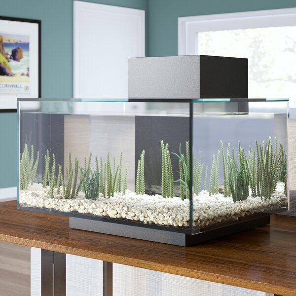 Hank 6 Gallon Edge Aquarium Kit by Archie & Oscar